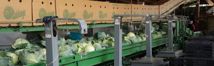 Northampton Growers switch to Greencoat