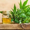 CBD- The Vital New Skincare Ingredient
