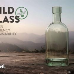 Wild Glass